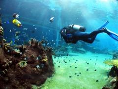 Kombinace kurzu angličtiny a potápění v Sydney, Austrálie